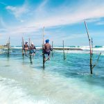 Hikkaduwa Tour Package   Tour Packages